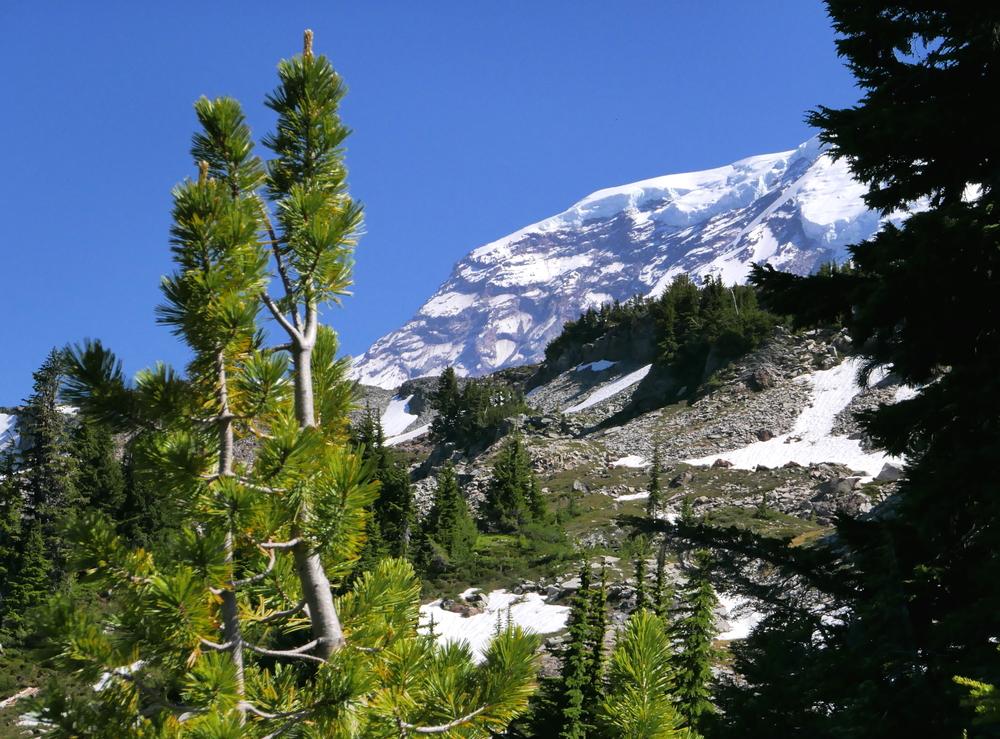 upper Seattle Park (Mother Mountain Orbit)