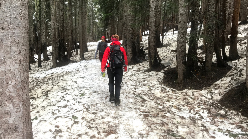 Snow in forested sections can offer navigation difficulties (Wonderland Trail to Summerland, 4800', June 10, 2018))