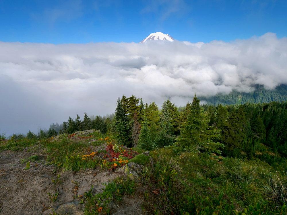 Partial view of Mt. Rainier from Shriner Peak