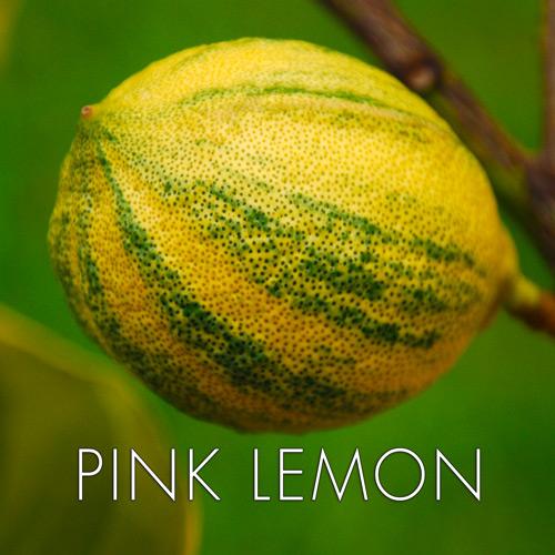 pink-lemon.jpg