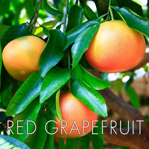red-grapefruit.jpg