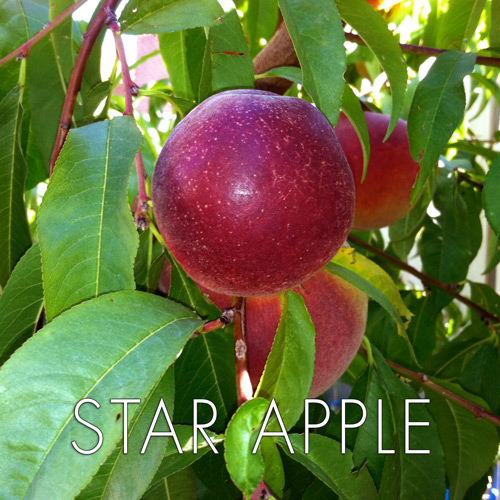 star-apple.jpg