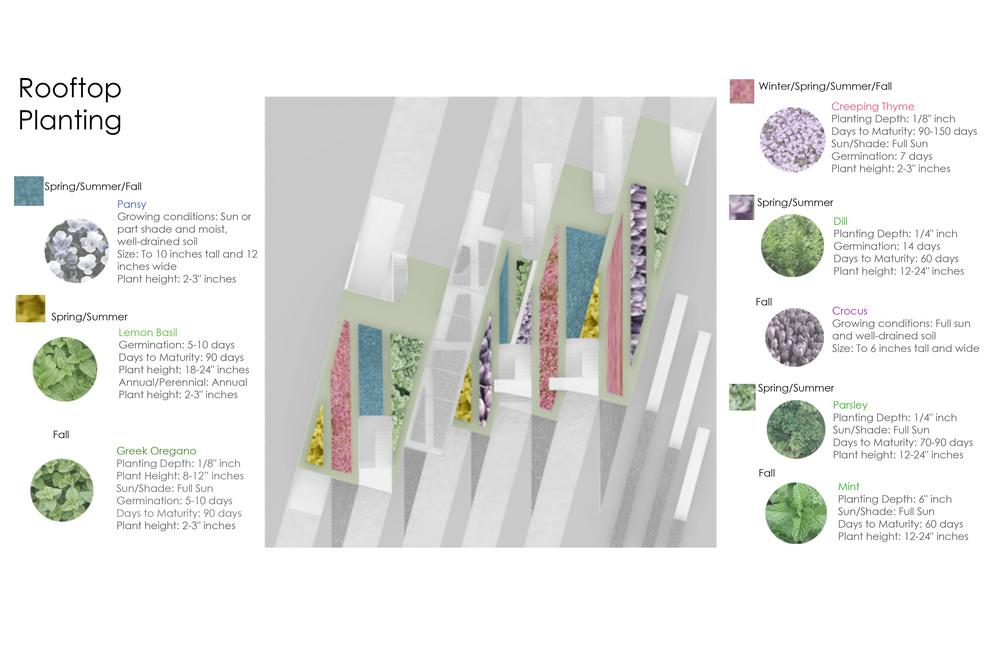 planting diagram-1
