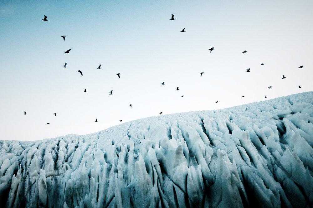 icebergbirdsWEB.jpg