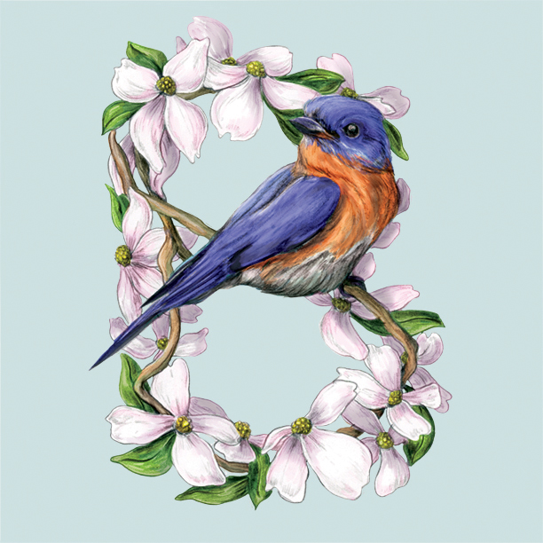 B - bluebird_72.jpg
