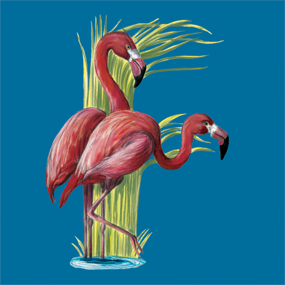 F-Flamingo_72.jpg