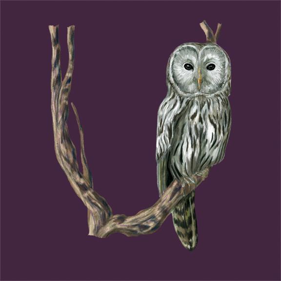U-Ural Owl_72.jpg