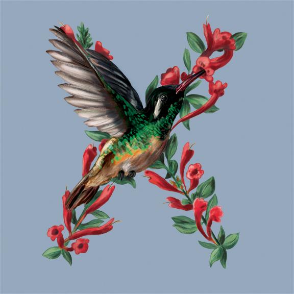 X-Xantus Hummingbird_72.jpg