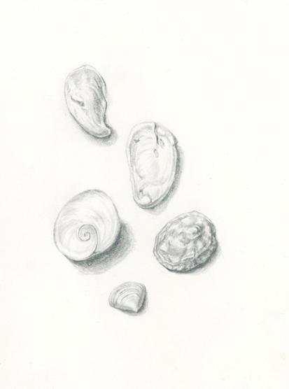 Shell study_72.jpg