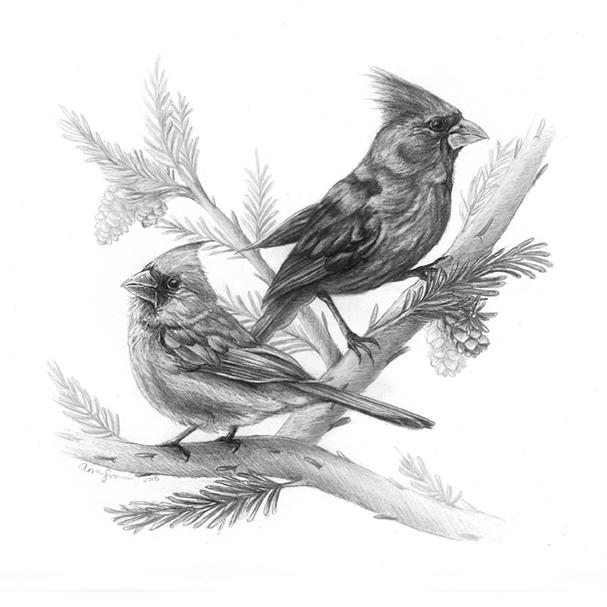 cardinals_WEB.jpg