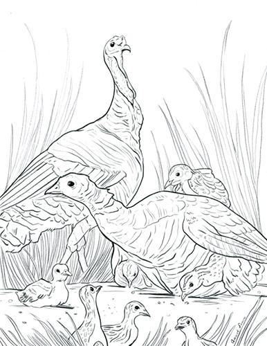 Hatchlings_Turkeys_AmandaSurveski.jpg