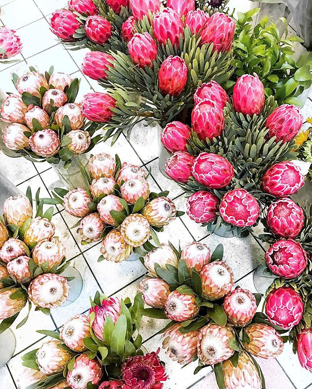 What do I have in common with the Protea? Well we both hail from the beautiful country of South Africa. Would love to know where u are from 💕