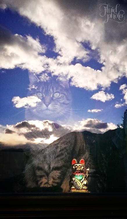 zen-cat.jpg