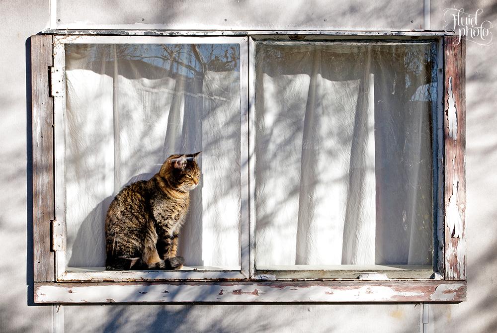 cat on window sill