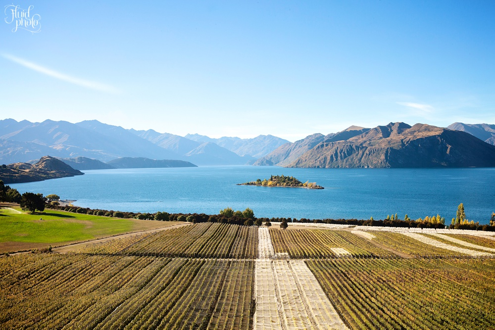rippon-vineyard-autumn-49