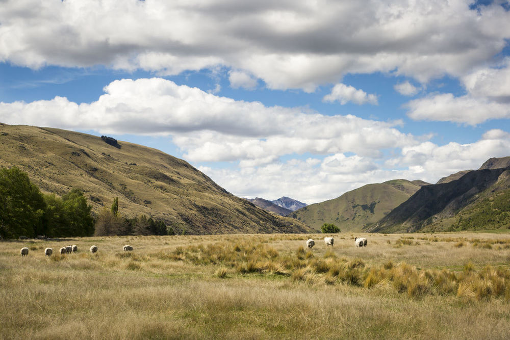 morven-hills-photo.jpg