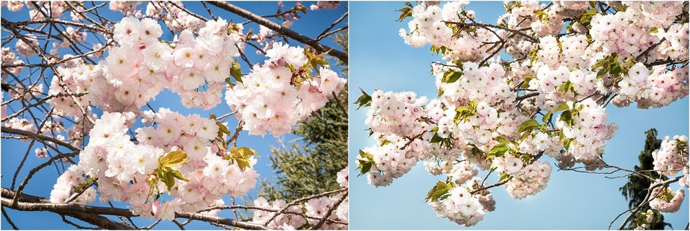 spring-blossom-wanaka-06.jpg