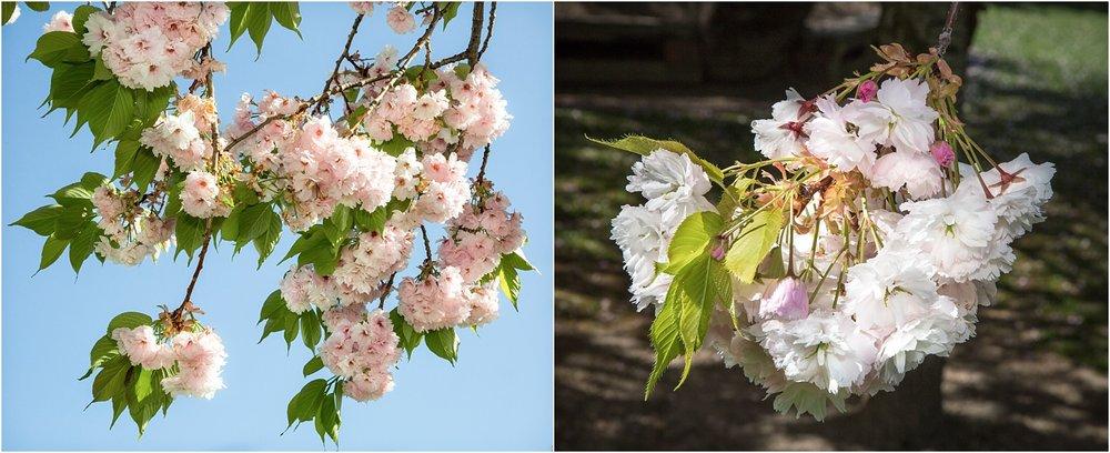 spring-blossom-wanaka-10.jpg