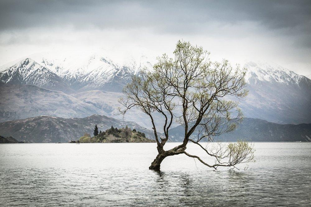 wanaka-tree-styled-shoot-22.jpg