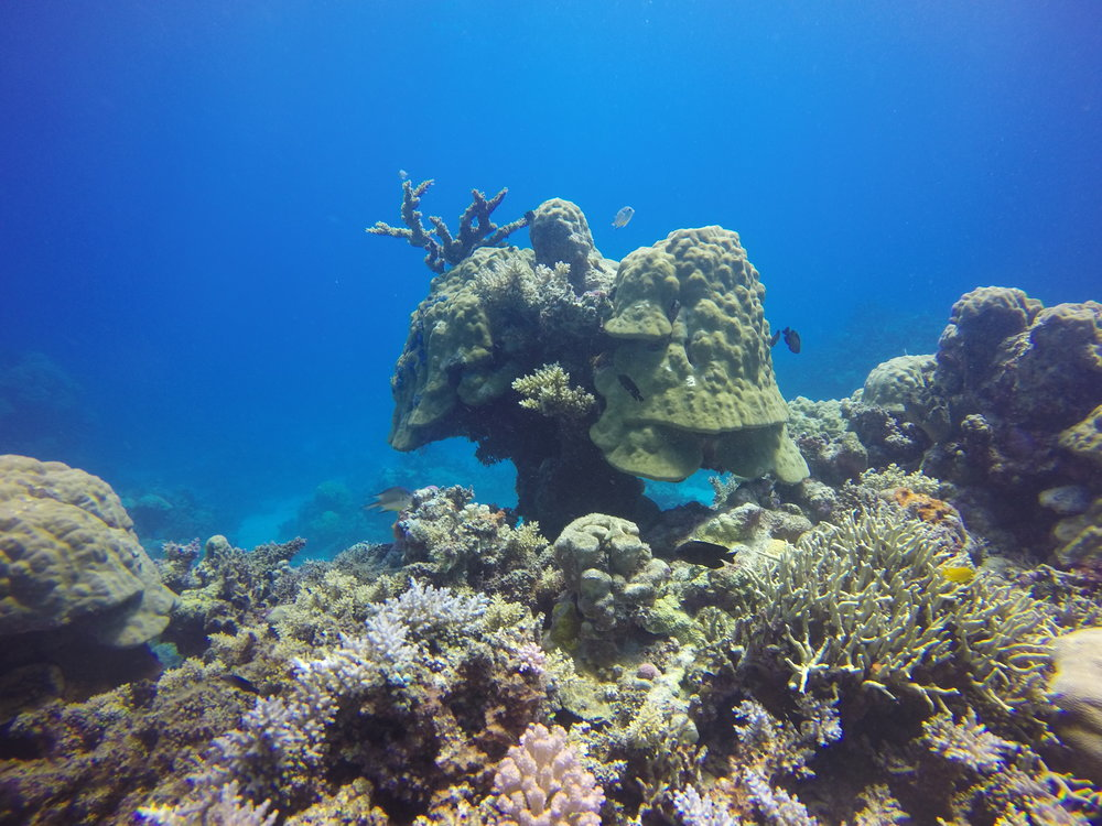 Amazing coral fit for an underwater Munchkinland