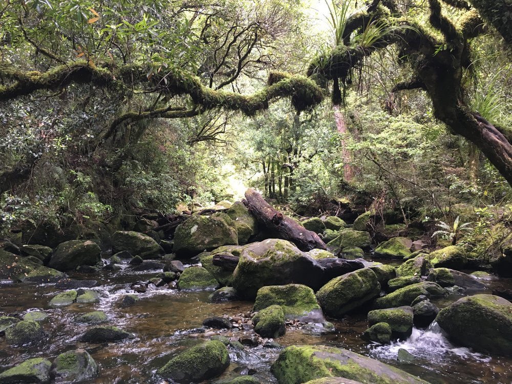 The path to the Korokoro falls was over this creek with the help of a wire cord