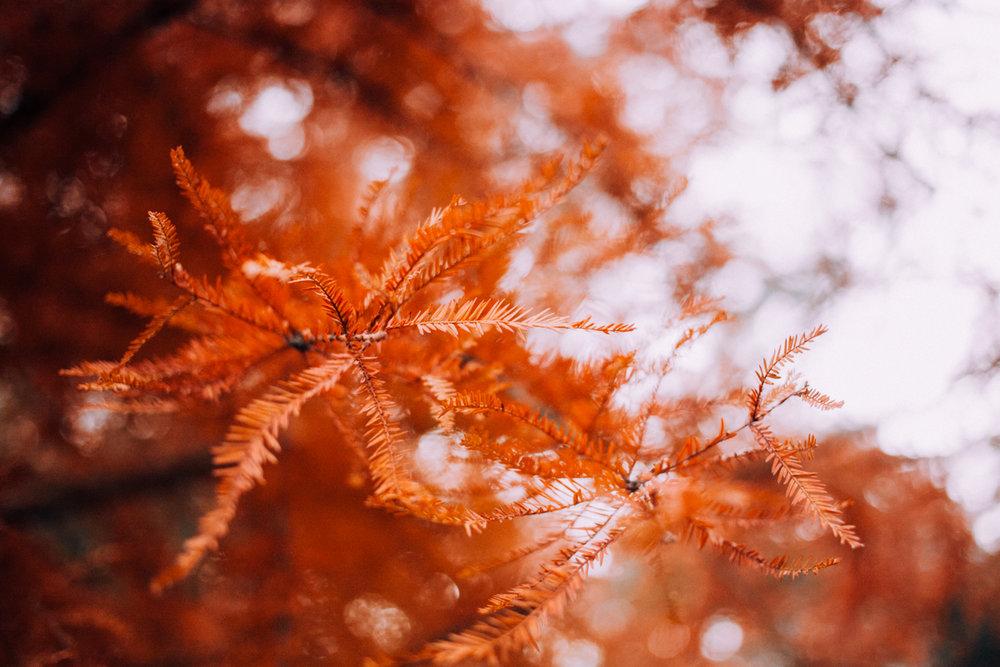 20170514_autumn-230.jpg