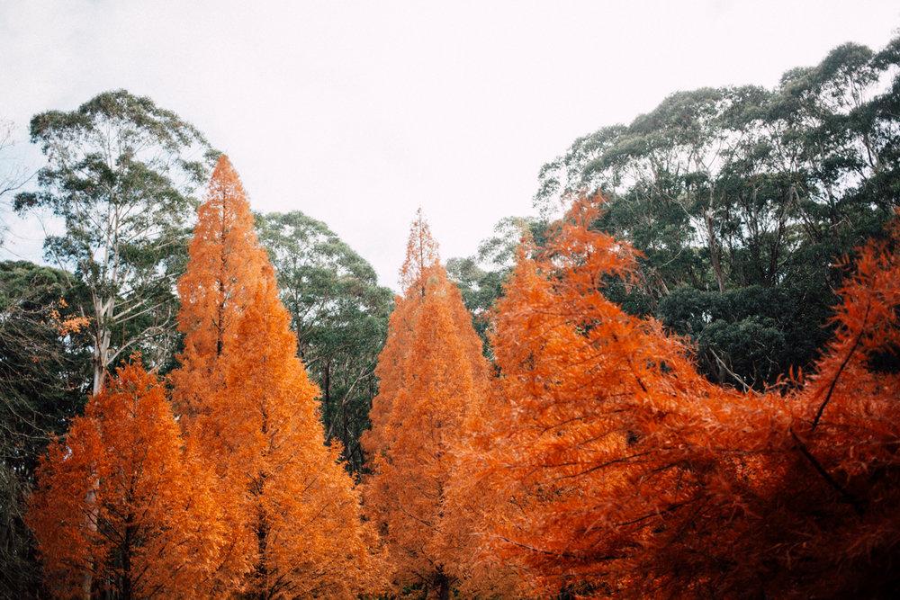 20170514_autumn-235.jpg