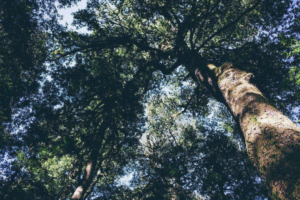 magnolia_mountain_campfire_gloucester_river_VII.jpg