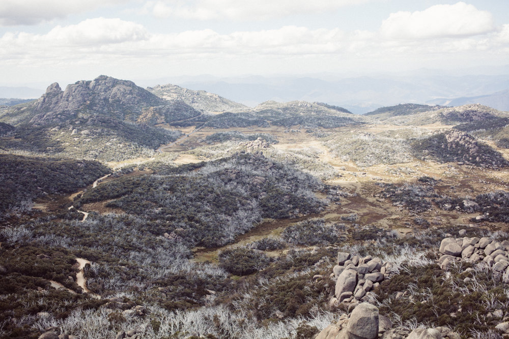 magnolia_mountain_highlands_mt_buffalo_VII.jpg