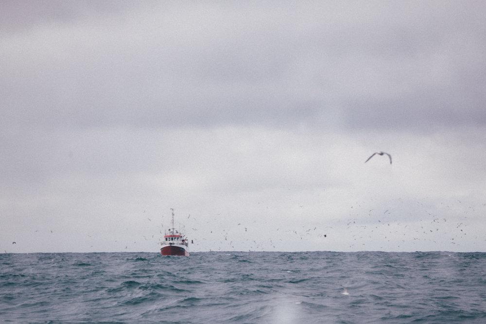 magnolia_mountain_nordland_bleik_fishing_boat.jpg