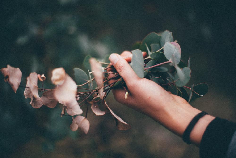 magnolia_mountain_silver_dollars_II.jpg