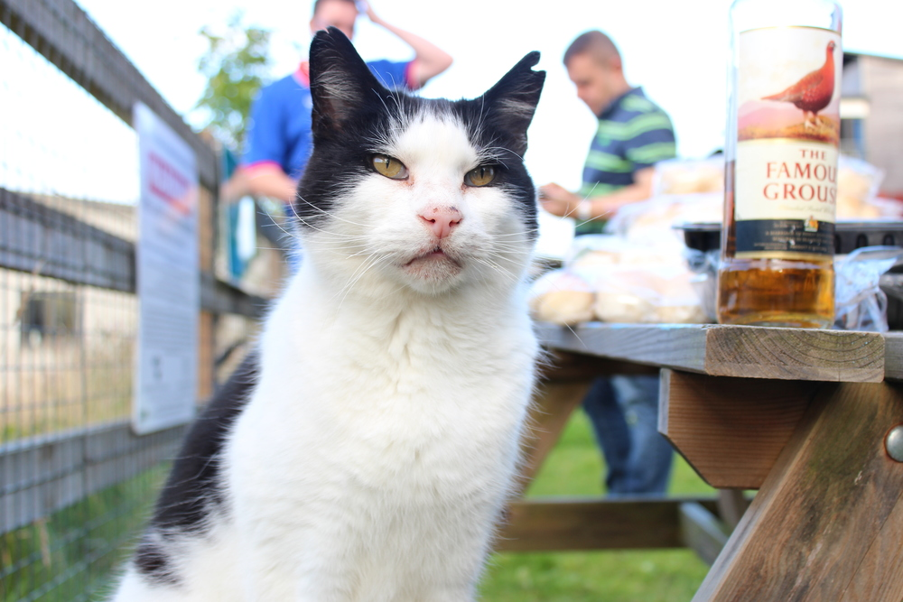 A Majestic Cat in Cornwall