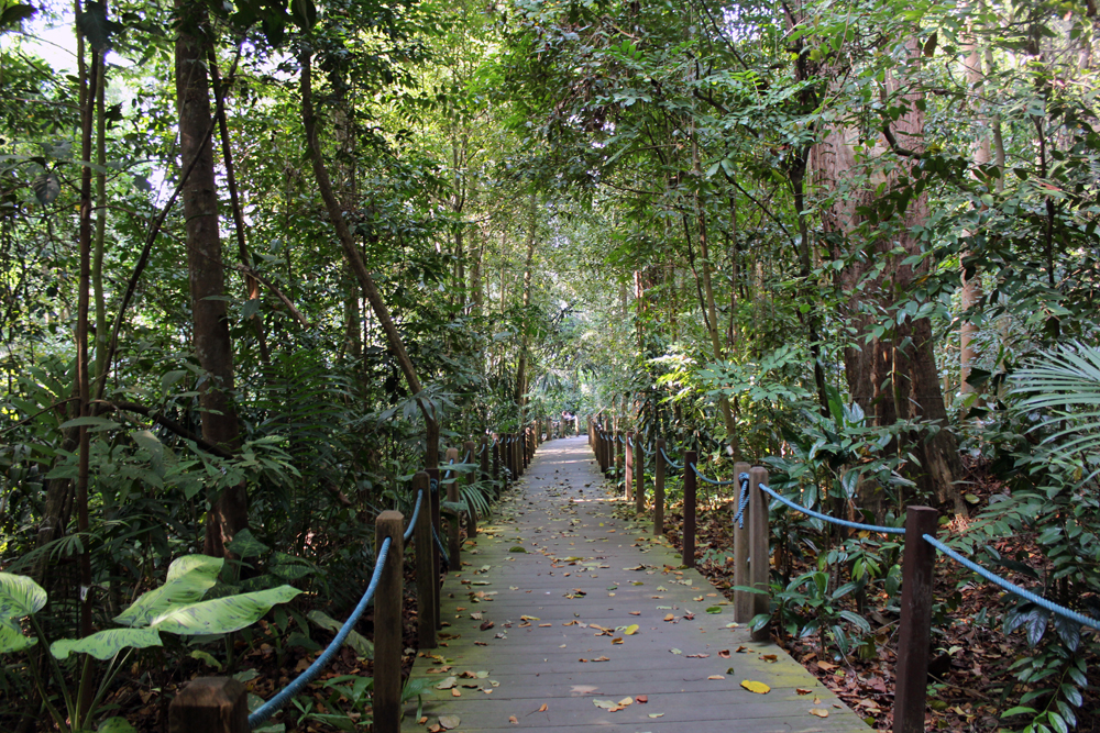 Singapore Botanical Gardens - Rain Forest Walk