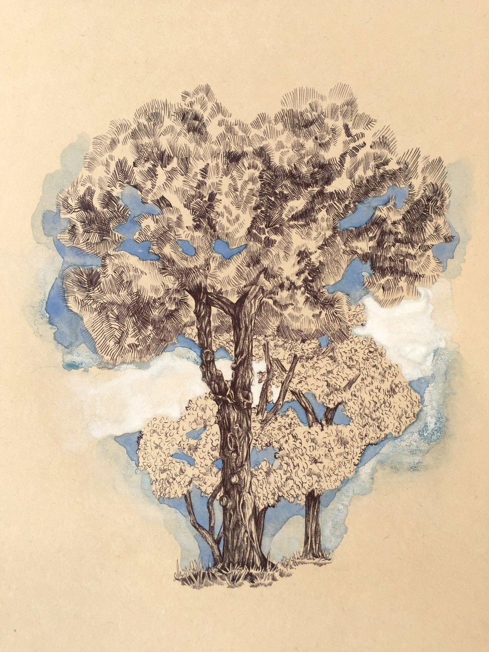 Tree from Parku Rinia