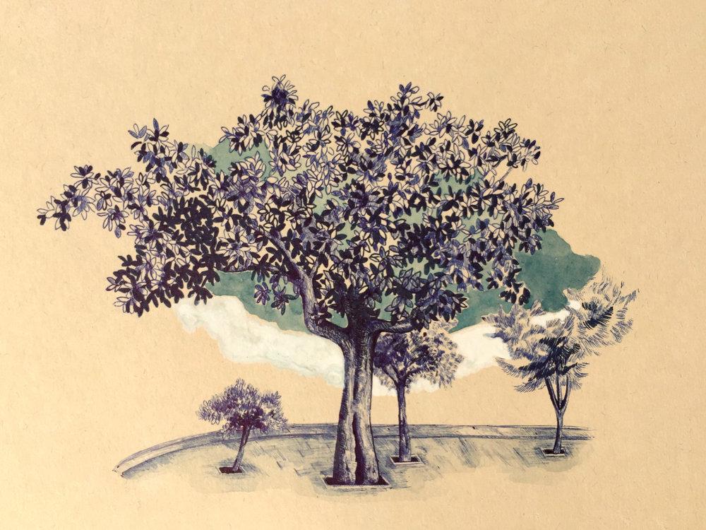 Tree from Rruga 28 Nëntori