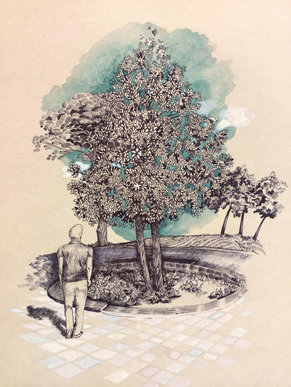 Tree from Skanderbeg Square