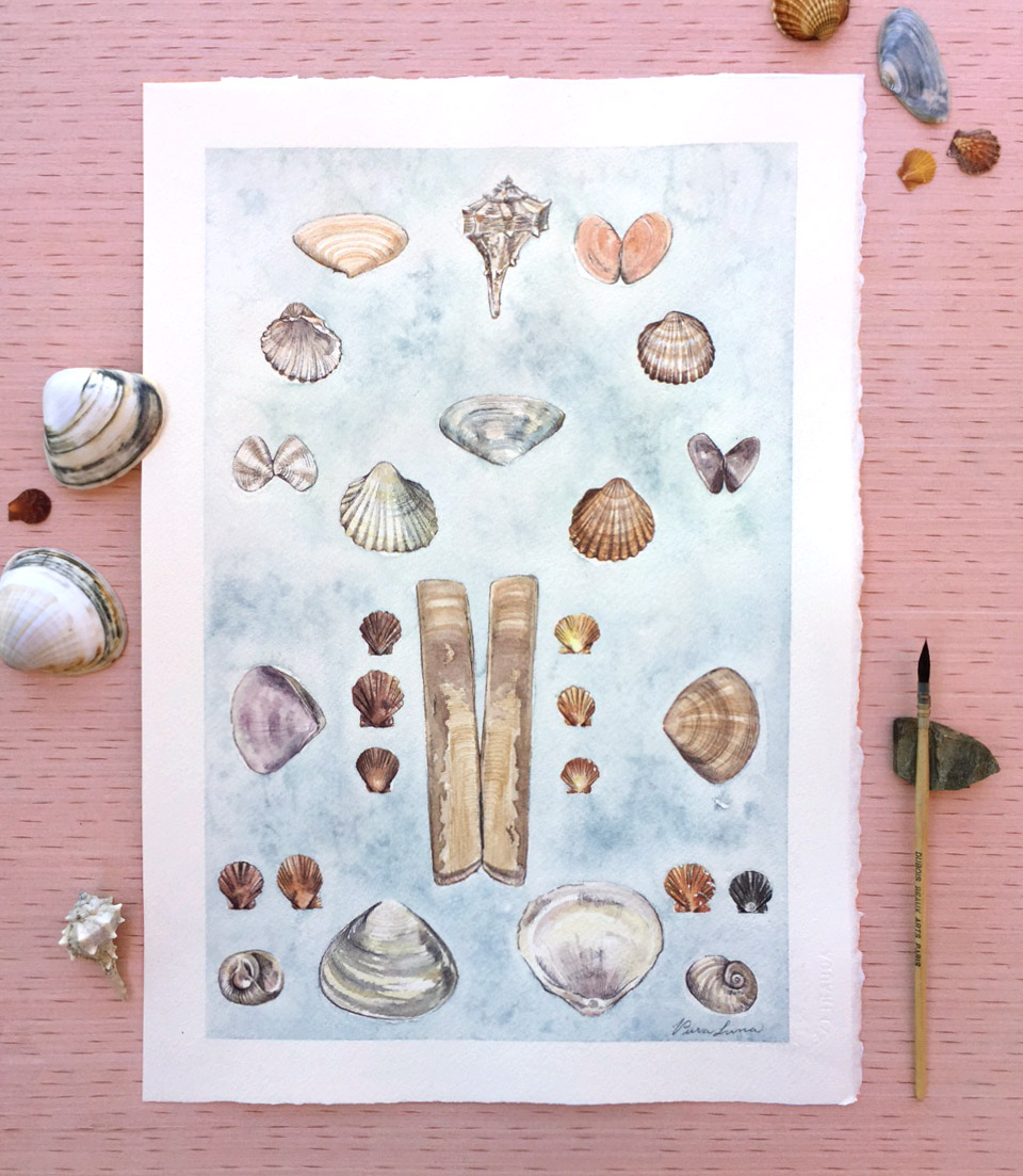 Seashells from Durrës
