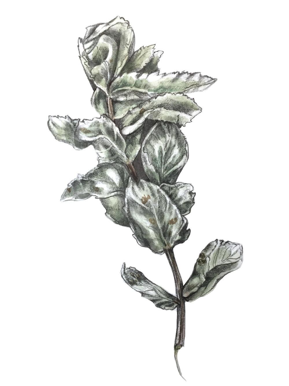 Plant from Fark.jpg