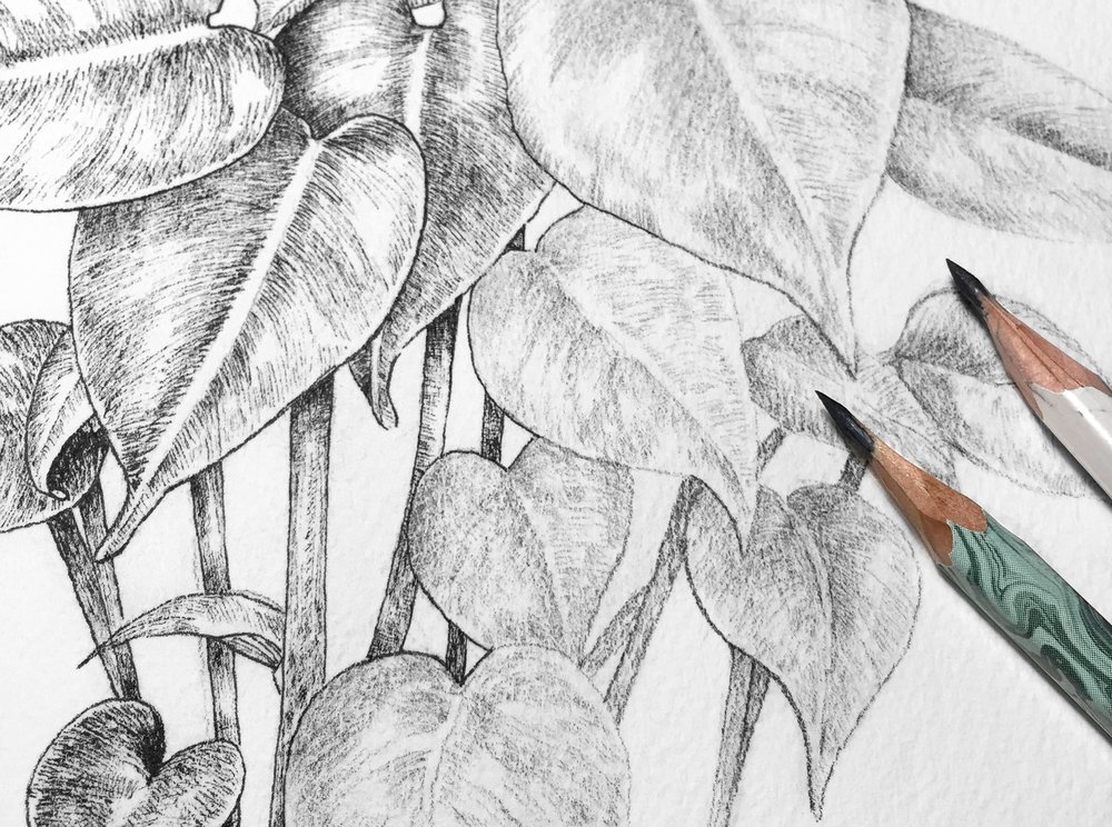 Learn to sketch, draw and paint plants.