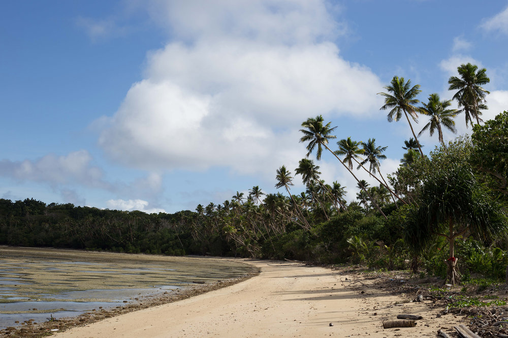 Palm trees along the Fijian coastline