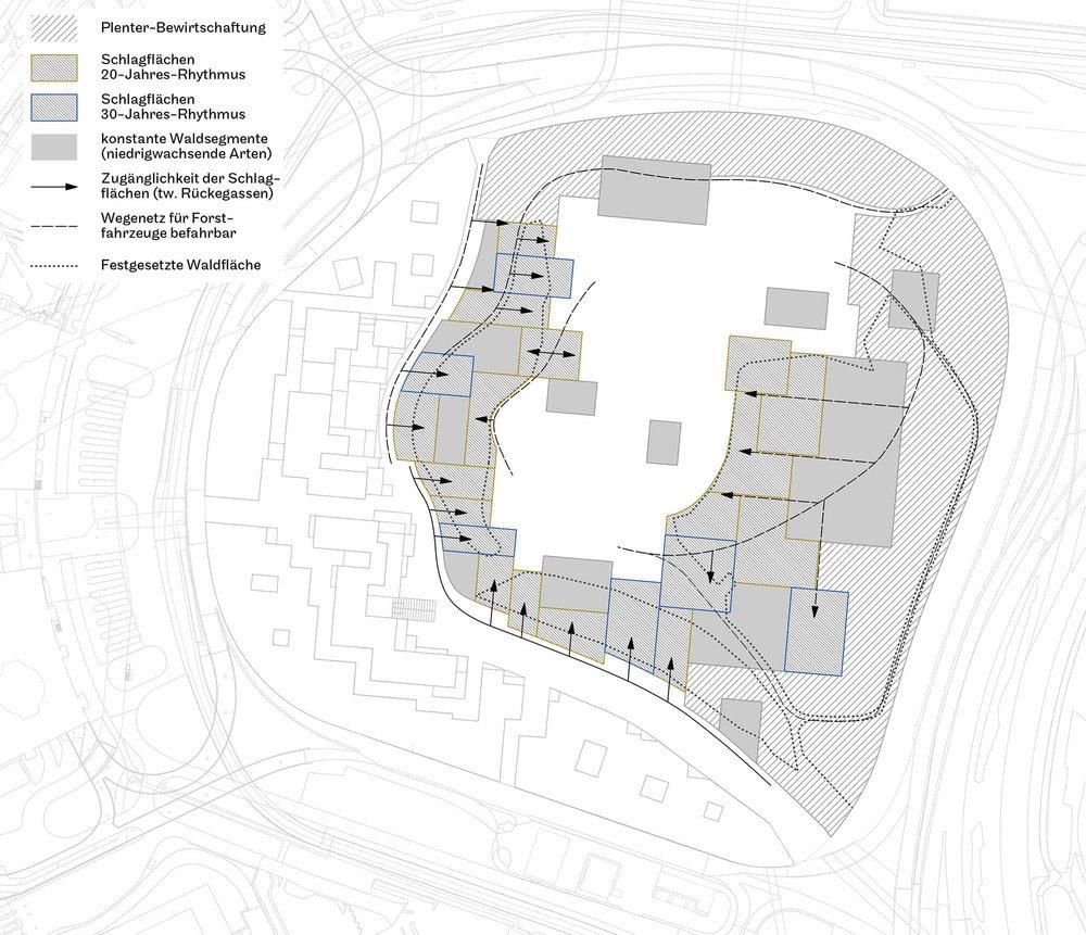 Architektonischer Waldbau   Die Höhenbegrenzung durch den Sicherheitszonenplan macht zukünftig regelmässige Eingriffe in den Wald auf dem Butzenbüel notwendig. Diese Notwendigkeit wird als Chance begriffen, durch die gezielte Steuerung dieser waldbaulichen Massnahmen typische Aspekte eines Parks (Raumabfolgen, Sichtbeziehungen, unterschiedliche Athmosphären) zu erzeugen. Diese Struktur unterliegt der Dynamik des Waldes und orientiert sich nicht an einem fixen Bild. Der Rand wird als Plenterwald bewirtschaftet, um eine konstante Waldhöhe zu erhalten. Die Böschungen zur Autobahn hin werden wie anhin regelmässig geräumt. Das Innere des Waldes ist in unterschiedliche Schlagflächen aufgeteilt. Diesem Muster liegt eine gestalterische Absicht zugrunde, während sich die weiteren Massnahmen waldbaulich begründen lassen. Der Schlagrhythmus (20/30 Jahre) der einzelnen Flächen orientiert sich an der maximal erlaubten Wuchshöhe. Die zeitliche Staffelung der Räumungen im 5-Jahres-Rhythmus erzeugt eine mosaikartige Waldstruktur.