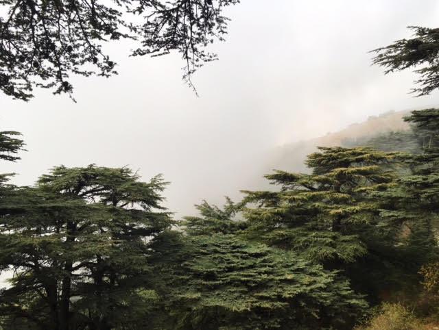 lebanon forest.jpg