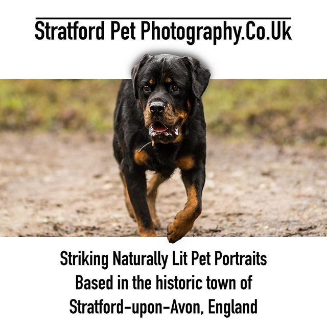Book now! #animalphotographer #animalphotography #petphotographer #petphotos #petphotooftheday #petphotography #rottweiler #rottweilers_of_instagram #rottie #dog #dogs #photography #photos #photographer #advert #3d #3dadvert #suahour #dogphotography #dogphotographer #photoshop #3ddog #dogdays #onawalk #dogwalk #dogwalking