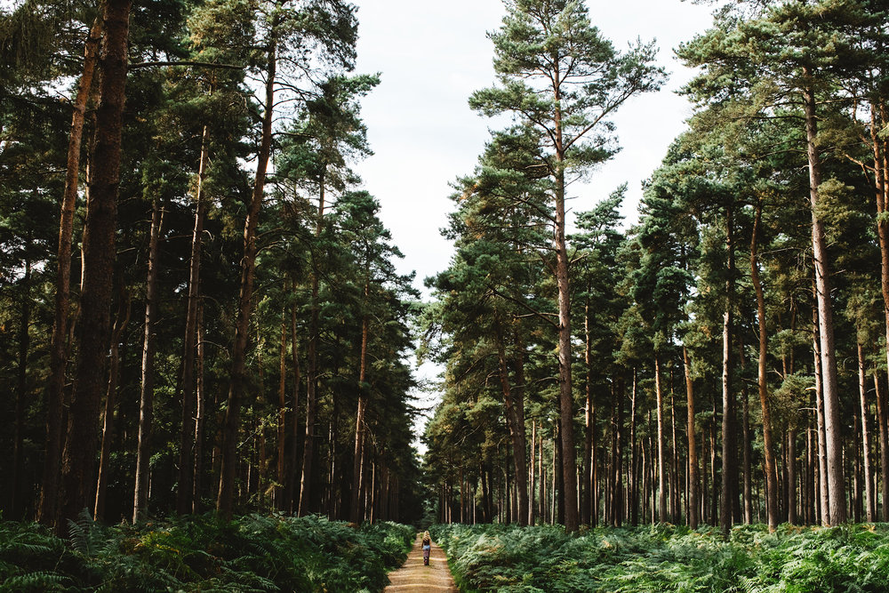 Thetford Forest - Matt Porteous