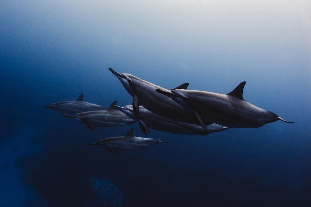 Hawaii_Dolphins-9.jpg
