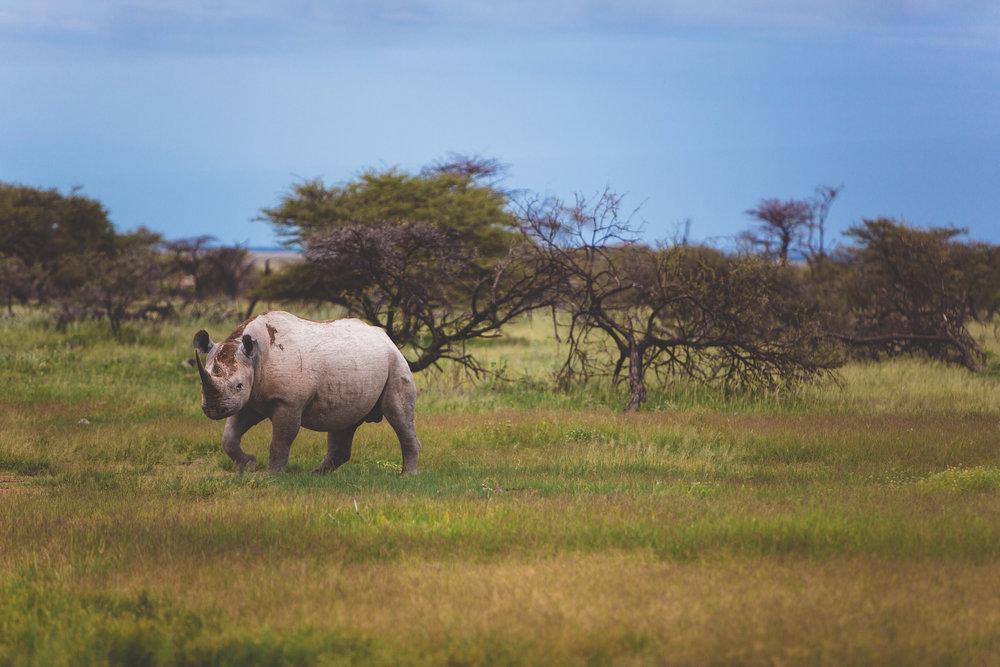 Namibia_Namutoni_Feb6_7059.jpg