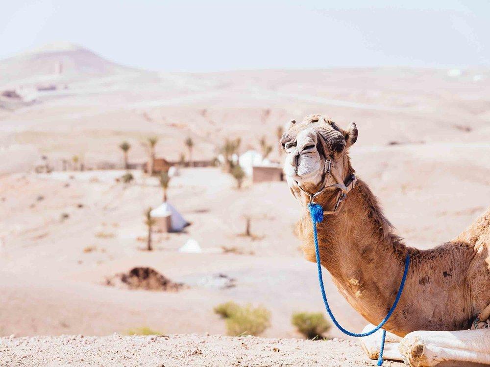 Morocco-08197.jpg