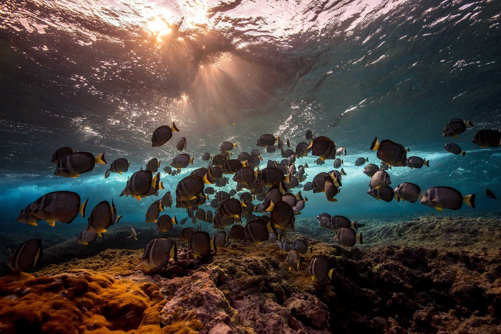 Ocean CultureLife - DELIVERING ETHICAL SOLUTIONS THROUGH BEAUTIFUL OCEAN STORYTELLING