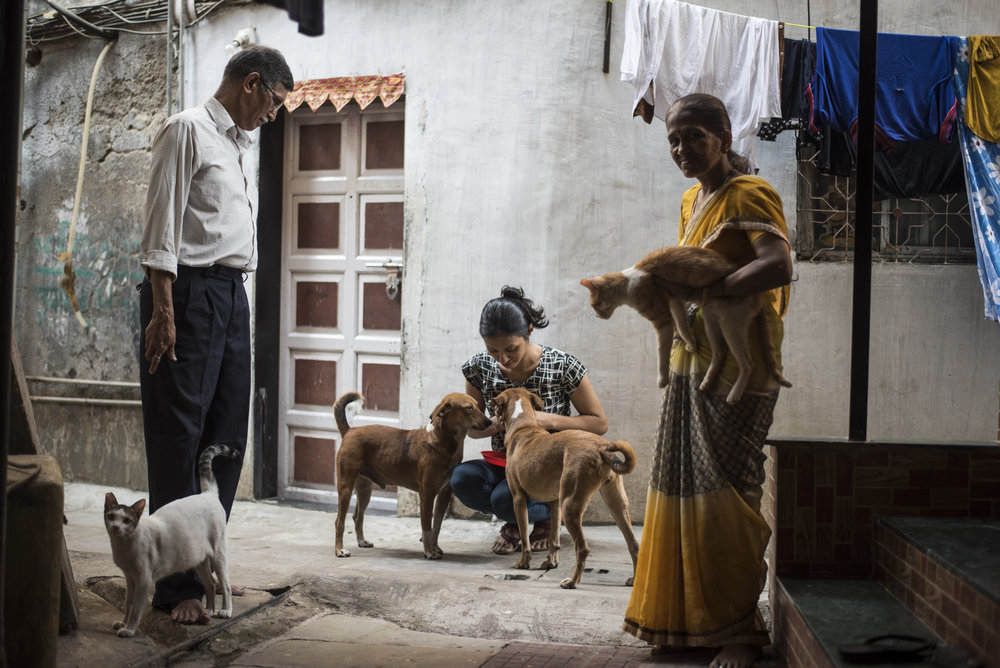 The Shenoys selflessly care for a cat and dog family that live outside their home.