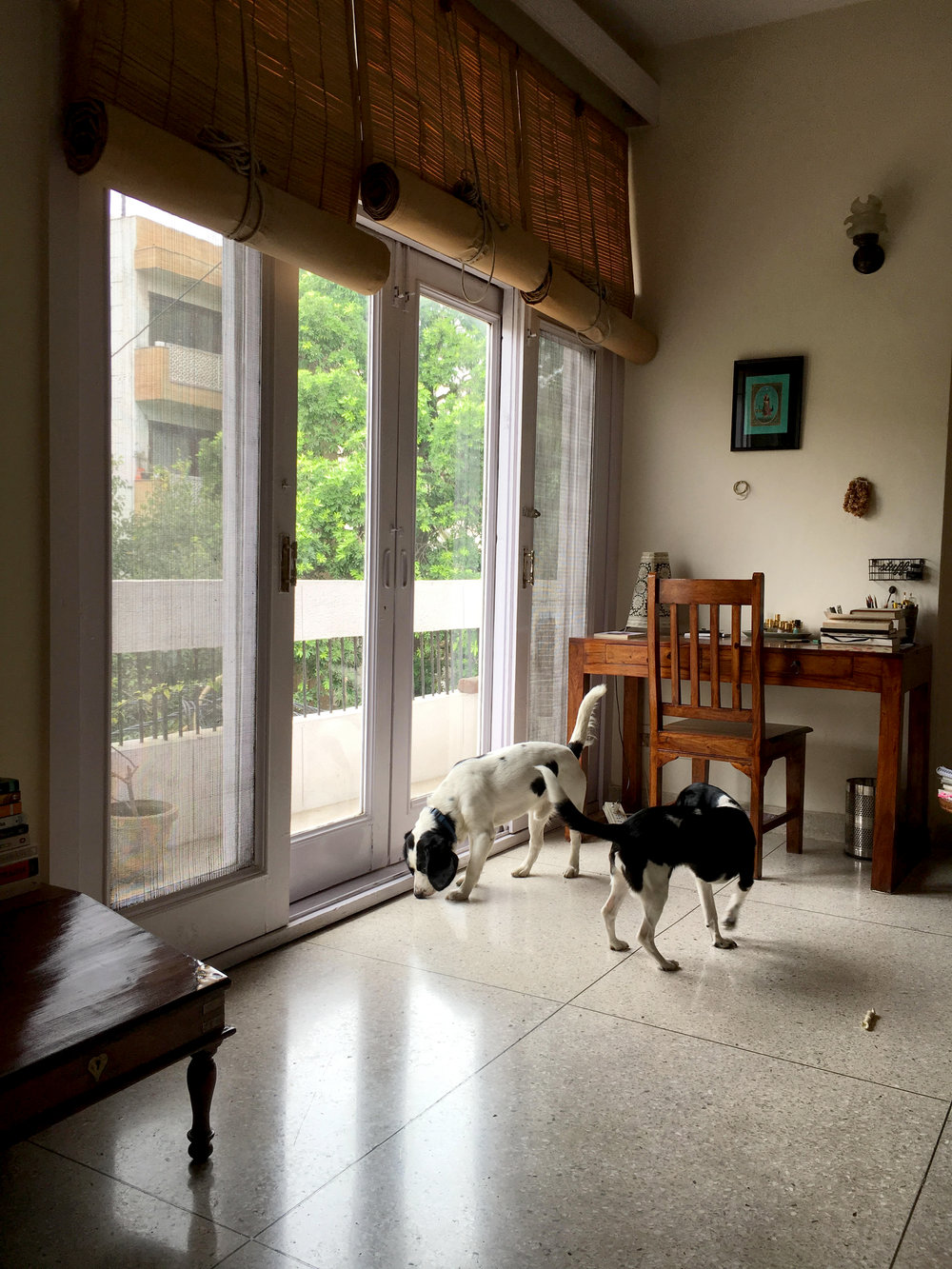 Aanchal's writing corner where she writes in the company of her dogs.